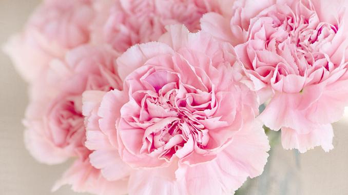 色彩心理ピンクの効果