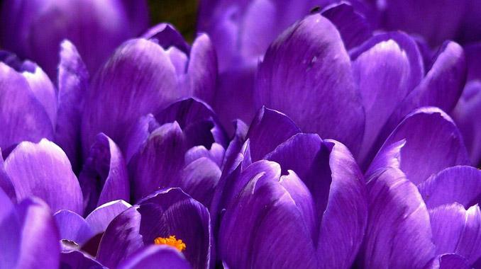 カラーセラピー紫の効果