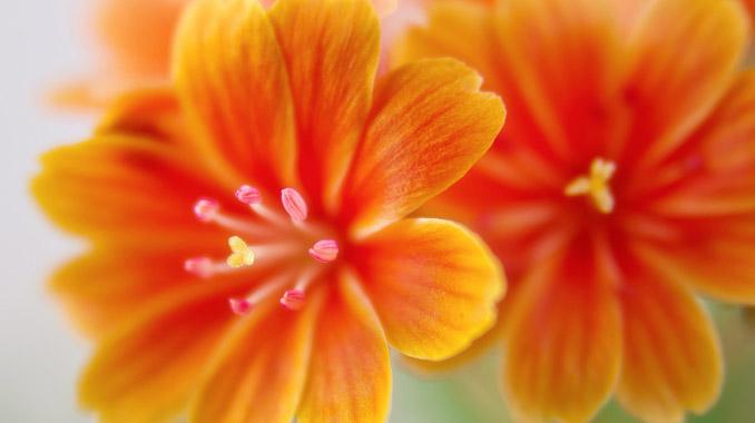 色彩心理オレンジの効果