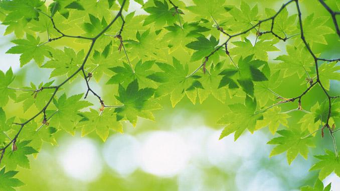 カラーセラピー緑の効果
