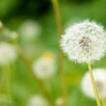 願いが叶う3つのコツ - 毎月1日に簡単にできるオススメ習慣